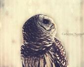 Owl 5x7 Fine Art Photography Print