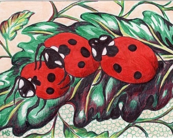 "Ladybug Drawing - Ladybug Art - Mini Wall Decor - Color Pencil, Pen and Ink Drawing - Lady Bugs Doing It - 4x6"" Original Drawing"