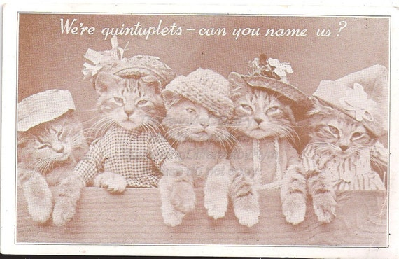 Dressed Up Cats, Vintage Real Photo Postcard