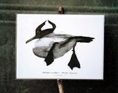 Hooded Merganser II : Archival Print Of Charcoal Drawing - Nature, Waterfowl Art 5x7