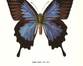 BUTTERFLY PRINT Art Original 1965 Book Plate 74 Beautiful Large Blue Mountain Butterfly Summer Flower Garden Nature home decor