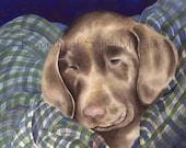 "Watercolor Print ""Chocolate Lab"" by Sandi McGuire"