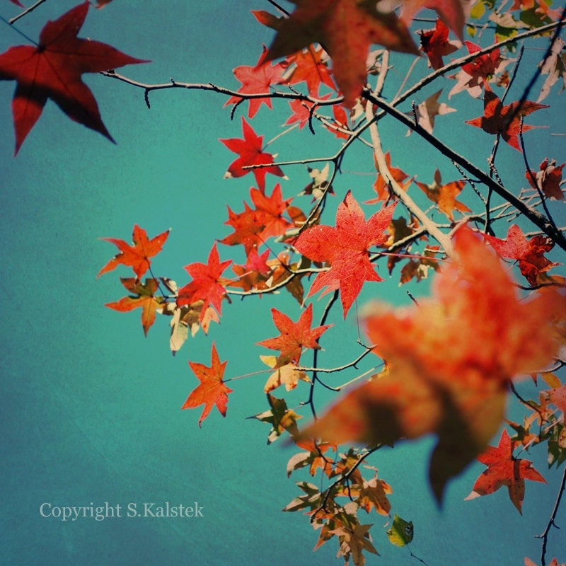 Wall Art Red Leaves : Autumn leaves art photograph red orange yellow fall