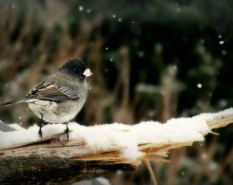 Bird Photography  dark eyed junco,winter snow,home decor,gifts under 25,nature,cute bird on snowy background,nature print,bird photography