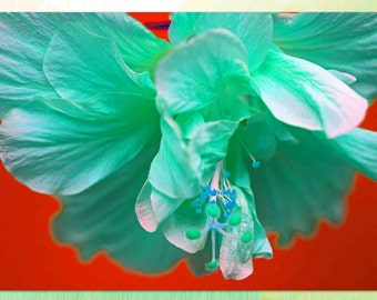"""Blue hibiscus on red background, notecard, 4.25""""x5.5"""", blank"""