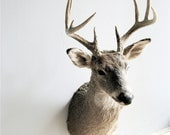 Vintage Mounted Deer Head