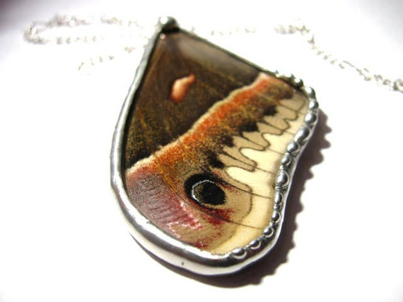 Moth / Real Cecropia Moth Wing Necklace / Moth Wing Jewelry