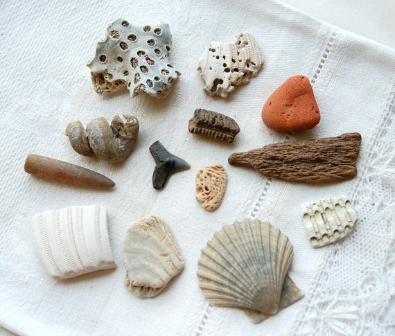 12 fossil collection starter kit