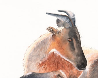 Goat Painting -G076- Wildlife art  -  print of watercolor painting- Splodgepodge A4 print