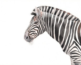 Zebra Painting -Z059- wildlife art - print of Watercolor painting 5 by 7