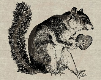 Cute Squirrel with Heart Instant Download Digital Image No.141 Iron-On Transfer to Fabric (burlap, linen) Paper Prints (cards, tags)