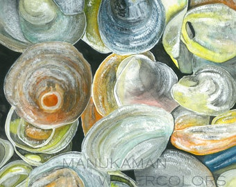 Cape Cod Jingle Shells Print of a watercolor by Damon Crook (7.5 x 9.5 inch art sized for 11 x 14 frame)