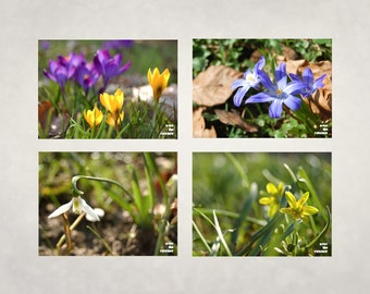 Spring flowers photograph, snowdrop, crocus, bluebell, nature photography, set of 4, 5x7 - titled: Spring Impressions III