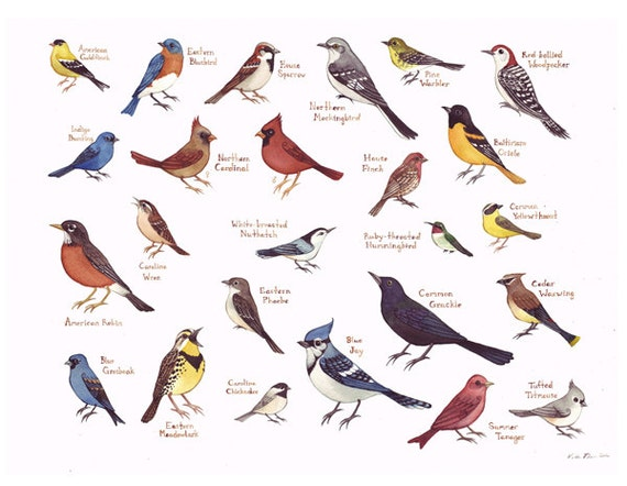 Eastern North Carolina Birds Field Guide Style by KateDolamore