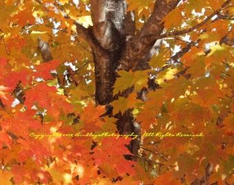 Orange Leaves - Graves Mountain, VA