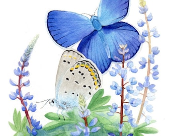 Karner Blue Butterfly & Wild Lupin Print