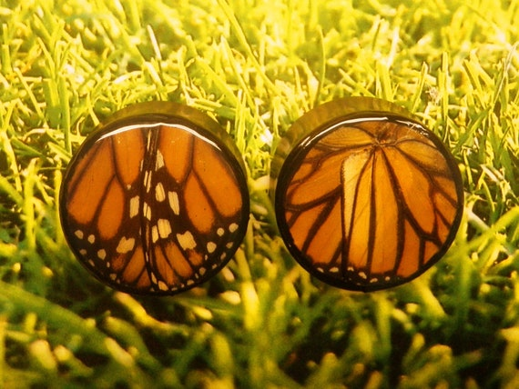 """1 1/4"""" Real Monarch Butterfly Organic Plugs"""