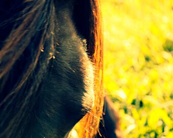 Horse Art Print | Horse Photography | Chocolate Brown Horse in Yellow Flowers at Sunset | Large Equestrian Art Print | Horse Lovers Gift