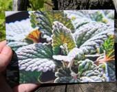 Spearmint Upclose-Macro- Plant- Herb- 4x6 Glossy Print