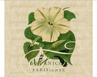 Paris ephemera morning glory flower digital download image transfer to fabric burlap paper pillows decoupage cards No. 612