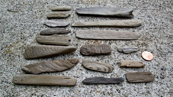 Lot of 17 Natural Flat Driftwood Pieces Lake Michigan Supply