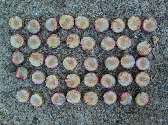 Lot of 41 Sliced Driftwood Round Pieces Natural Lake Michigan Mosaic Supplies