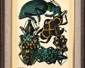 Treasures-Fashion-Insects-Bugs-Art Nouveau-Art Deco-1930(2)