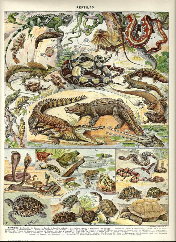 Dictionary Page French Reptiles Vintage Animal Poster
