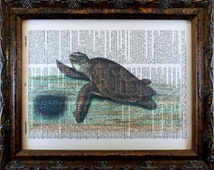 Hawksbill Turtle Art Print from 1743 on Dictionary Book Page
