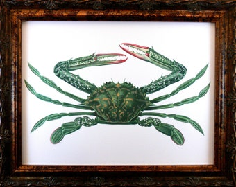 Green Crab Art Print from 1873 on Bristol Art Paper