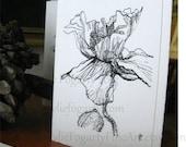 "FLOWER CARD, Fine Art, ""Poppy Study 3"" Kylie Fogarty, Poppy Pods,  Black and White Drawing, Minimalist Card"