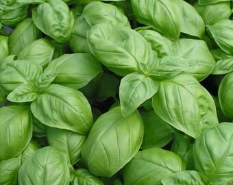 Basil - Genovese Herb - Heirloom - 30 Seeds