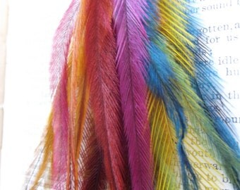 Feathers, Emu feathers,rainbow feathers, feather dangle,
