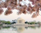 Pink Cherry Blossoms at Jefferson, Washington D.C., Matted Photography Print By Klaire Warren