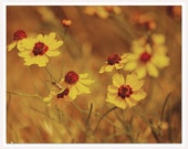 Saffron Yellow Flower Photograph, Vintage, Shabby Chic Art Print, Bathroom Art print, Yellow Autumn Fall Photograph, Guest Room Wall Art