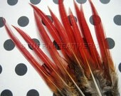 Natural Red tip feathers - Golden pheasant thin spiky feather for millinery, crafts, jewelry making and more/ 4-6 in (10-15 cm) long / F68-4