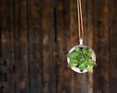 Barnacle Pod, Succulent Planter, Hanging Plant
