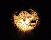 "7-10"" Hanging Light Puffer Fish Real Blowfish Lamp Taxidermy Animal Pendant Lighting Tiki Bar Nautical Decor LIghting"
