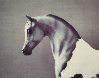 horse, fine art photography