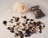 DESTASH CLEARANCE Shell Chips Drilled Mixed Sizes Very Small to Large, Lip Shell - warmsandsgiftshop