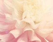 Flower Photography - Nursery Art - Dahlia Photograph - Flower - Gift for Her - Fine Art Photography Print - Pink White Home Decor