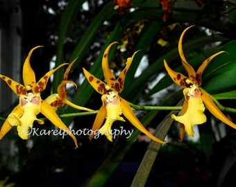 African Dancing Yellow Orchid Trio Wall Decor