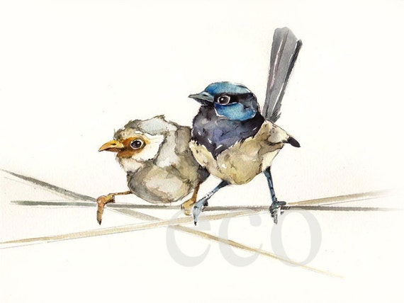 11x9 inch FAIRY Wren Couple ORiGiNal watercolor painting