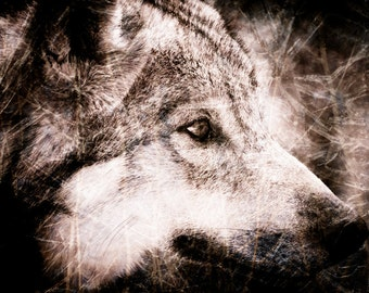 Wolf Wall Art - Wildlife Monochrome - Sepia Textured Home Decor - Fine Art Animal Photography Print
