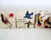 Rustic Botticino marble coasters/ Songbirds of New England/ set of 3/ light beige marble with colorful birds