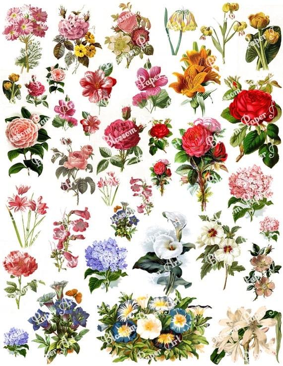 Flowers Collage Sheet - Digital Scrapbook - Scrapbooking - Decoupage Download Images - Vintage - Printables - Blossom Paper Art - 1294