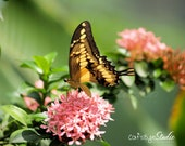 BUTTERFLY AND FLOWERS Pink Green Garden Butterfly Closeup Photo Print No. 7 Yellow Black Butterfly Photography