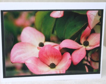 photo card, dogwood , flower photo card
