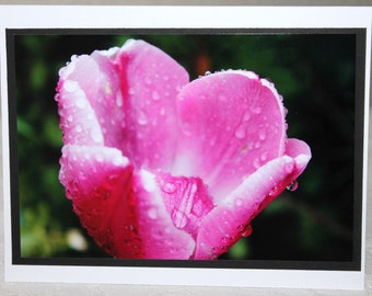 photo card, pink tulip, flower photography