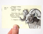 Bighorn Sheep on Library Card - Print of my painting of bighorn sheep on library card for the book Bighorn Sheep - Father's Day gift